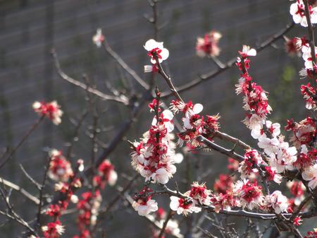 2010-04-16_02.jpg